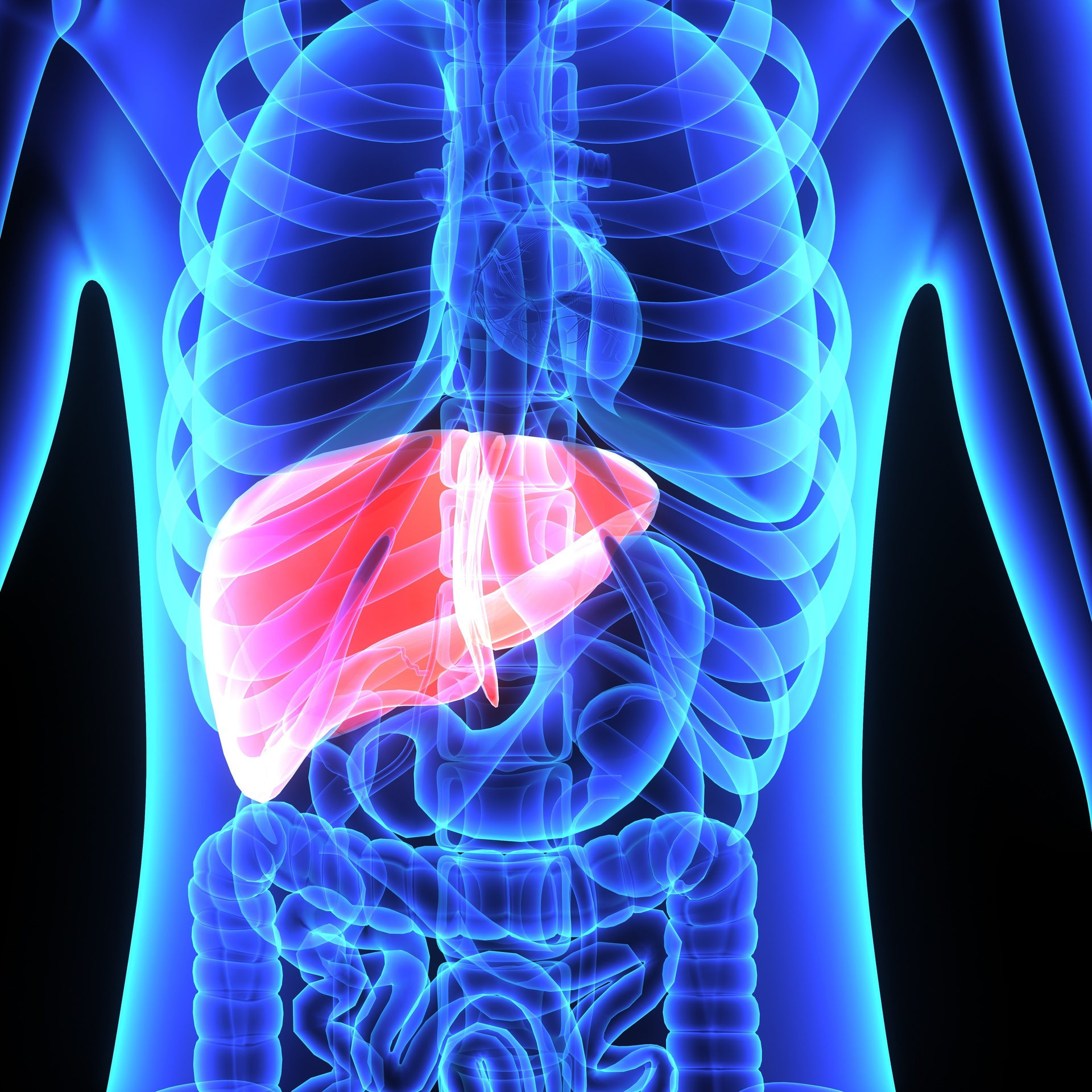The Human Liver | Liver Health - Pooler GA
